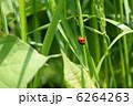 草 昆虫 植物の写真 6264263
