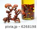 漢方生薬 きのこ 漢方薬の写真 6268198