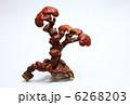 漢方生薬 きのこ 漢方薬の写真 6268203