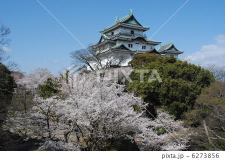 和歌山城と桜 6273856