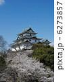 和歌山城と桜 6273857