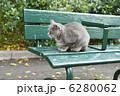 猫のいる公園 6280062