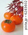 かき 柿 果物の写真 6283602