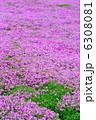 シバザクラ 花 植物の写真 6308081