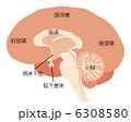 脳の仕組み 6308580