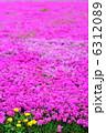 シバザクラ 芝桜 満開の写真 6312089