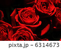 薔薇 6314673