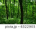 森 6322903