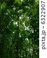 見上げた森 6322907