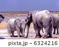 象 ゾウ アフリカゾウの写真 6324216