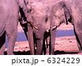 象 野生動物 ゾウの写真 6324229