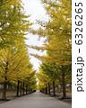あづま総合運動公園・イチョウ並木 6326265