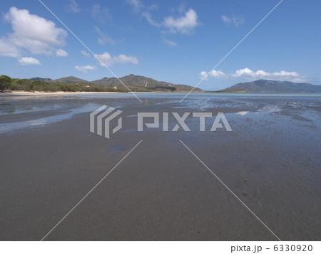 オーストラリアのディンゴビーチ 6330920