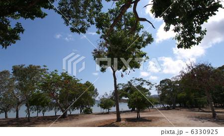 オーストラリアのディンゴビーチ 6330925