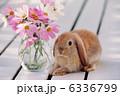 うさぎ 小動物 ウサギの写真 6336799