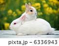 うさぎ 小動物 ウサギの写真 6336943