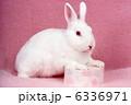 卯 白兎 ウサギの写真 6336971