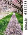 さくら 桜並木 サクラの写真 6352283