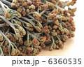 わらび 蕨 ワラビの写真 6360535
