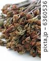 わらび 蕨 ワラビの写真 6360536
