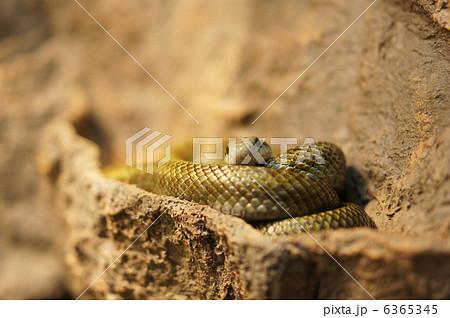 蛇 6365345
