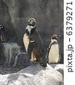 ペンギン 6379271