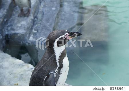 ペンギン 6388964