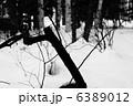 枝 6389012