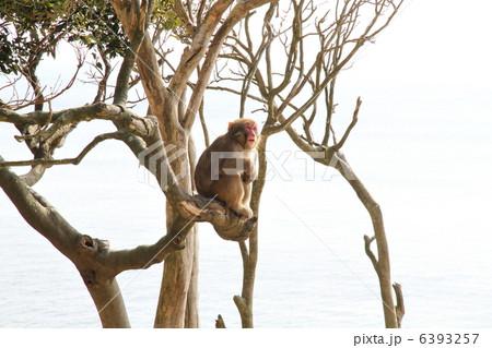 木に登る猿 6393257