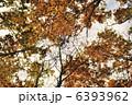 晩秋の森 6393962