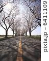 さくら 並木道 樹木の写真 6411109