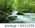 奥入瀬渓流 森 渓流の写真 6411258