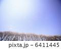 桜と青空 6411445