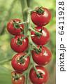 プチトマト フード 食品の写真 6411928