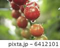 ミニトマト プチトマト とまとの写真 6412101