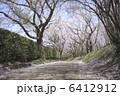 桜並木 6412912