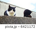 ノラ猫 のら猫 動物の写真 6421172