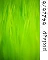 Green 6422676
