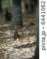 竹の子 筍 たけのこの写真 6441062