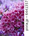 つつじ お花 花の写真 6441357