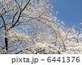 桜 6441376