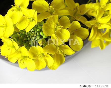菜の花と陶器 6459026