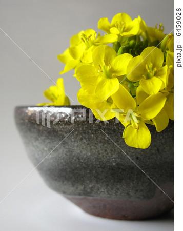 菜の花と陶器 6459028