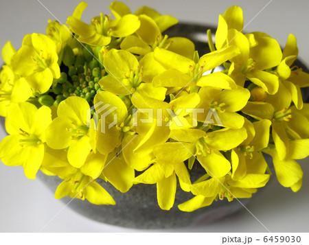 菜の花と陶器 6459030