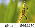 くも 蜘蛛 クモの写真 6468859