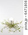 LED LED電球 電球の写真 6471808