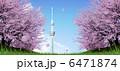 東京スカイツリー スカイツリー 桜並木のイラスト 6471874