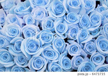 青いバラの写真素材 Pixta