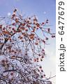 雪の中の柿の木 6477679