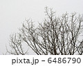 冬の枯れ木 6486790